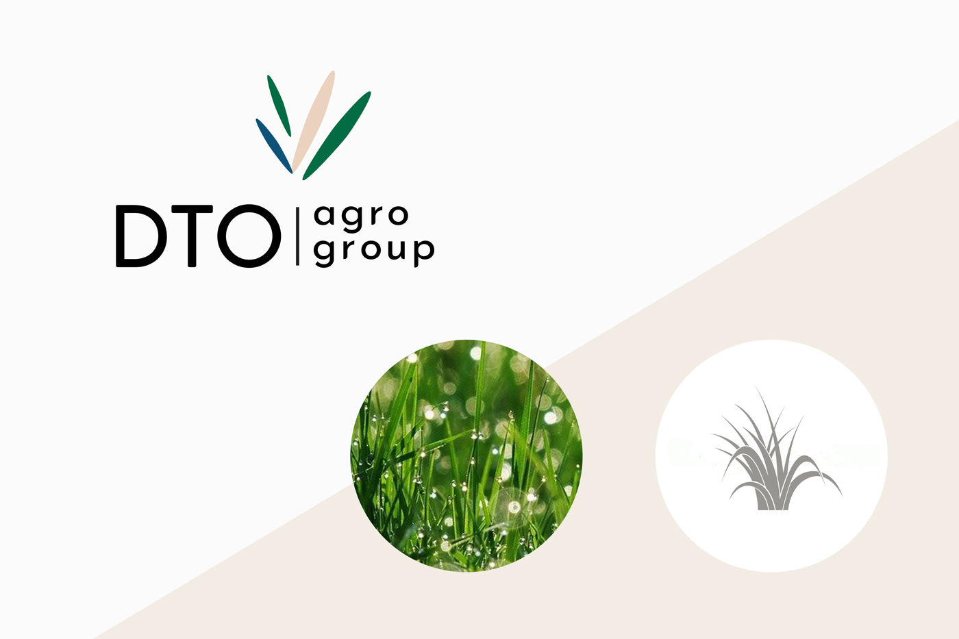 Logo and brand identity for ukrainian agricultural company DTO
